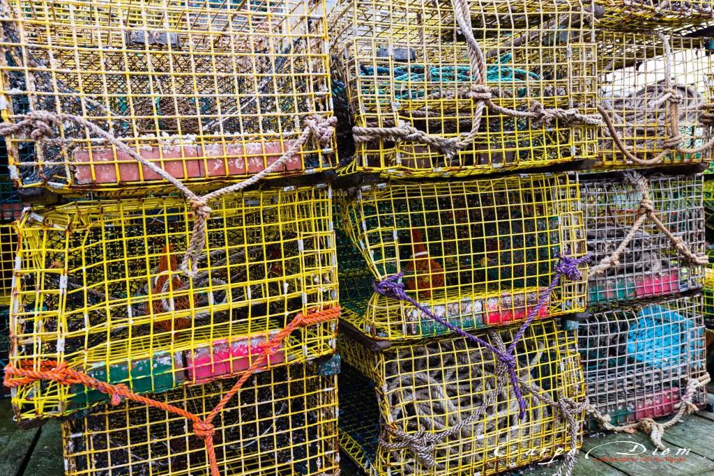Lobster bẫy, Maine