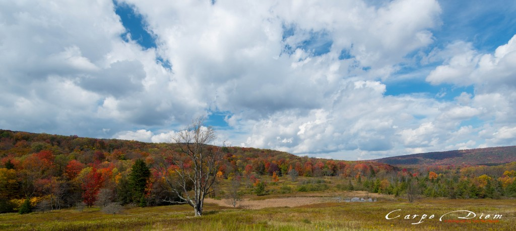 Canaan Valley State Park, WV