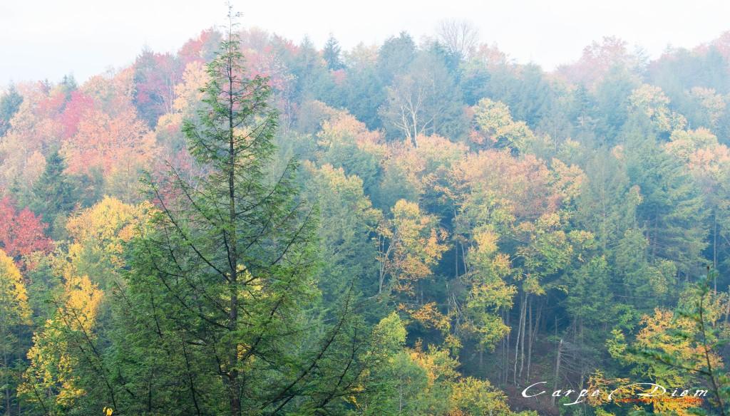 2013-autumn-blackwaterfall-cp-5
