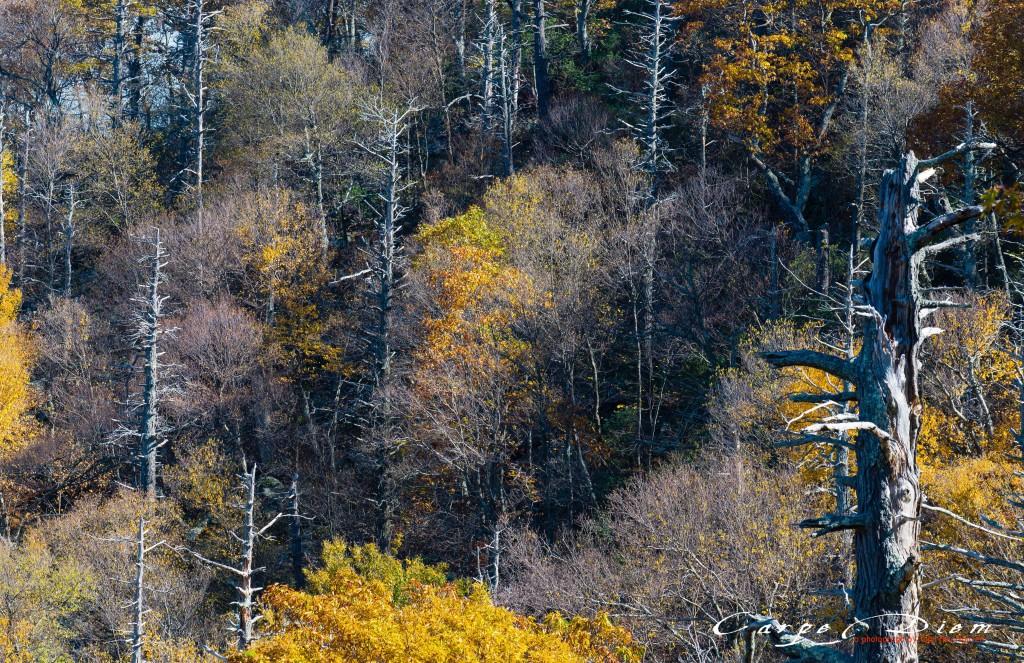 Nhìn những mùa Thu đi, Skyline Drive, Virginia, USA
