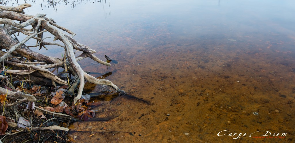 Sâu, Burke Lake, Burke, Virginia