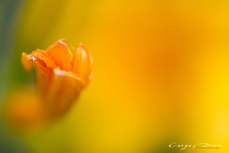 Tháng 6, hoa trước nhà