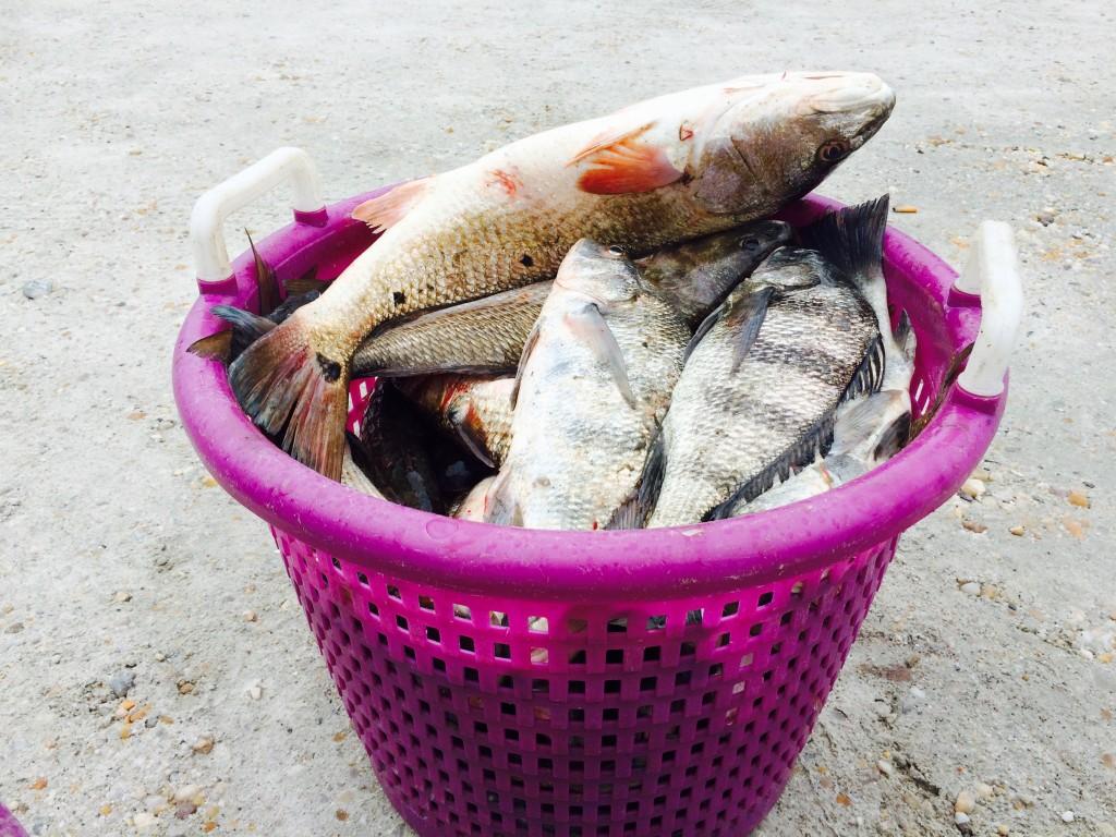 Fresh catch fish, Carolina Beach