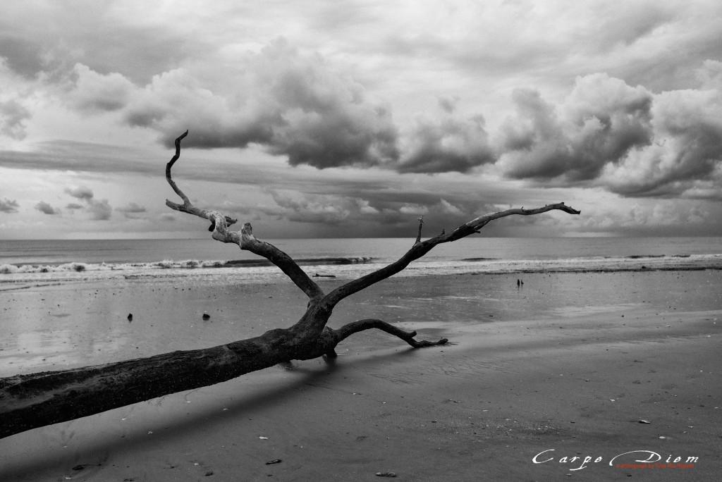 Boneyard Beach, Charleston