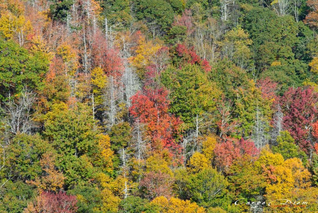 mùa Thu ở North Carolina