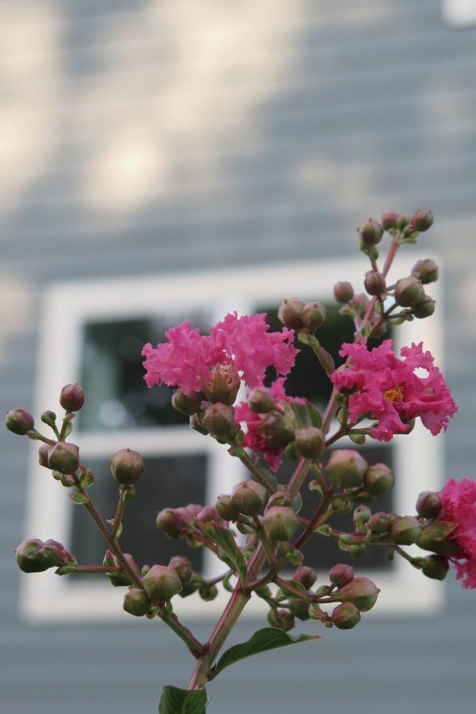 Hạ Tử Vy màu hồng