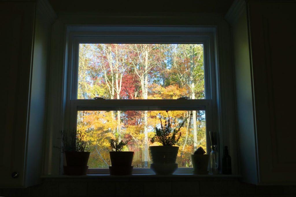 Mùa Thu sau nhà